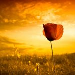 Amor Infalível